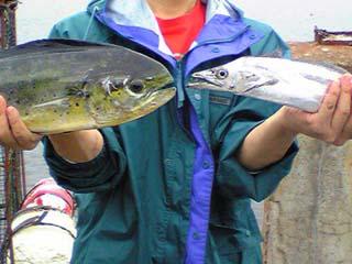 080915シイラ&太刀魚2
