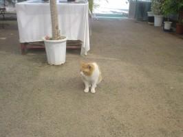 なついている野良猫