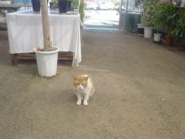 興味を示した野良猫