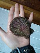 貝の数々01