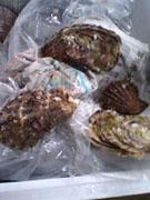 貝の数々03