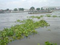 ワット・アルンへの川