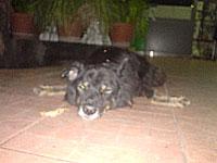 コンビニ前の犬フラッシュあり