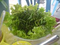 新鮮な生野菜2