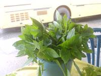 新鮮な生野菜3