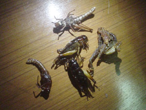 虫と蛙の唐揚げのアップ