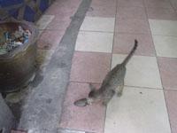 子猫の朝食