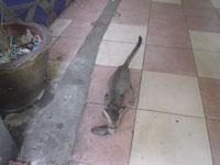 子猫の朝食(警戒中)